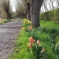 Allée avec Tulipes - Toegangsweg met tulpen - Road with tulips - Zufahrt mit Tulpen