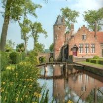 Iris pseudacorus au chateau - Iris pseudacorus aan het kasteel - Iris pseudacorus at the castle - Iris pseudacorus zum Schloss